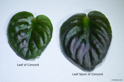 Leaves Compared