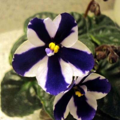 Flower Plant 1