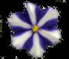 six-petals-yachiyo-blue