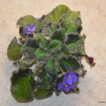 Chimera Leaf 2.1