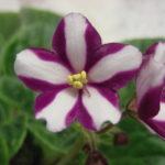 re-flower